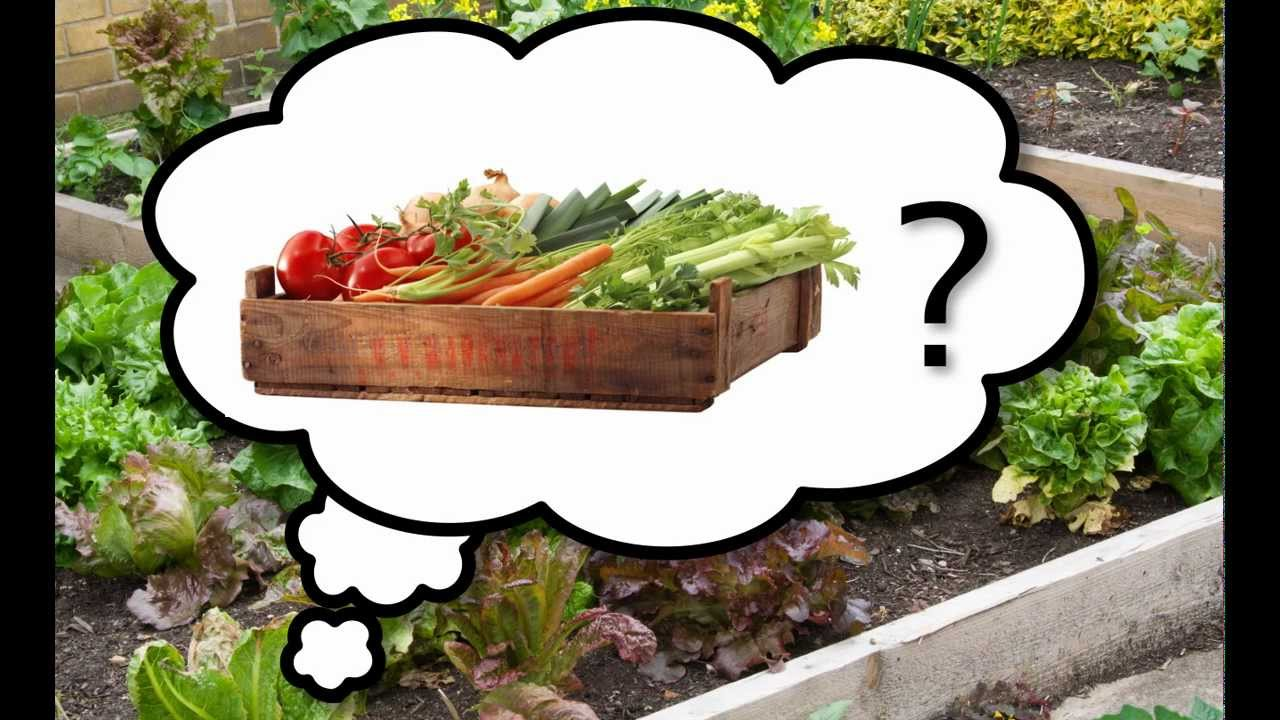 The Best Vegetables To Grow In Your Garden   Choosing The Tastiest, Easy To  Grow Plants   YouTube