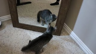 DUDE THE CAT GOT INTO A FIGHT!!!!!