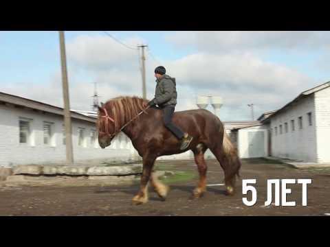 Лошади тяжеловозы Малютка и Орланд. ПРОДАЖА (УКРАИНА).