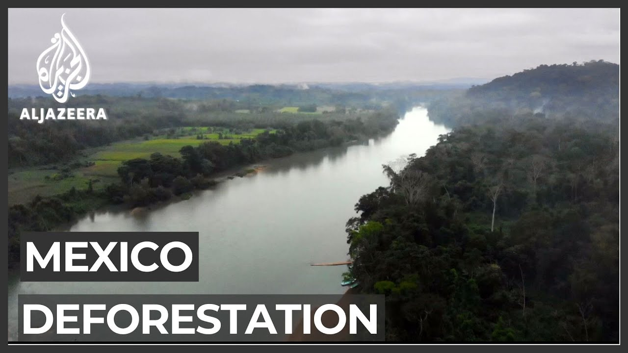 More than 90 percent of Mexico's Lacandon jungle deforested