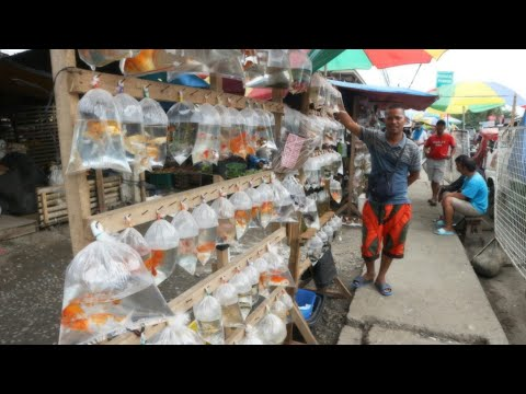 Local Fish Market Philippines | Amazing Salt Water Fish And Other Ornamental Fishes
