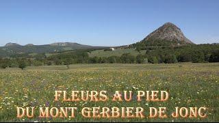 Ardèche - Fleurs au pied du Mont Gerbier de Jonc