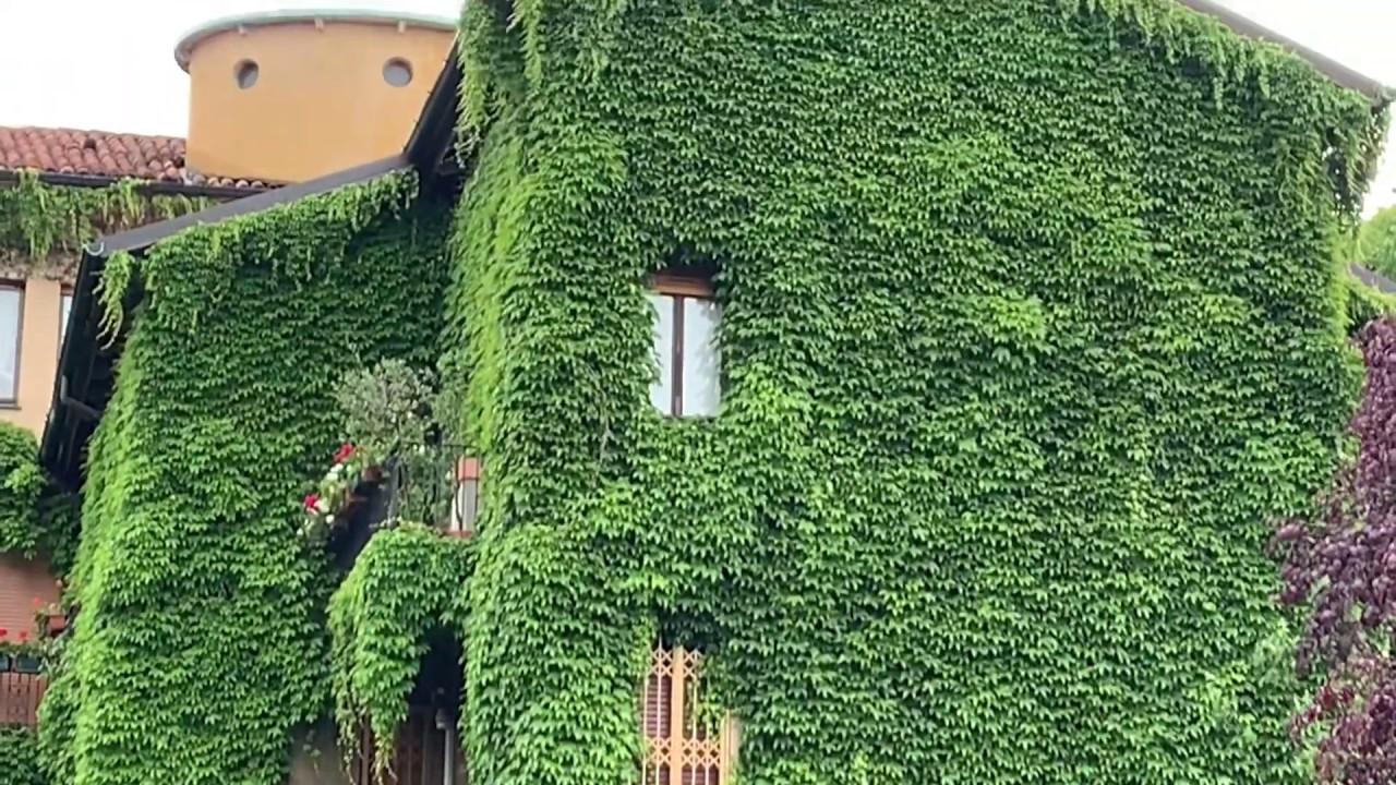 Pareti Verdi Verticali Costi cos'è un giardino verticale: benefici, esempi e tecniche