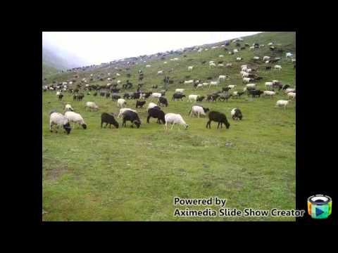 nepali.khristian.song.bhedi.goth.charda.%e0%a4%a8%e0%a4%bf