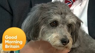 Should Employees Get Compassionate Leave for the Death of a Pet? | Good Morning Britain