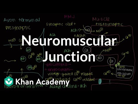 Neuromuscular junction, motor end-plate | NCLEX-RN | Khan Academy