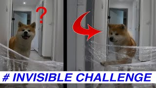 My Dogs Reaction To The Invisible Challenge (Akita Inu)