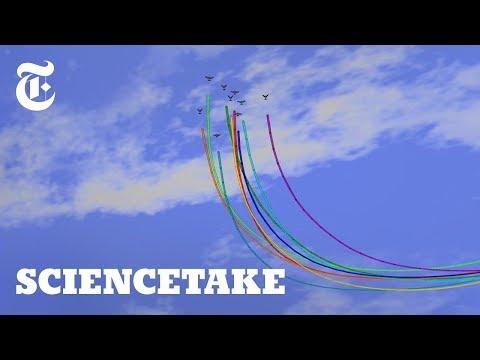 When Their Leaders Are Wrong, Homing Pigeons Adapt | ScienceTake