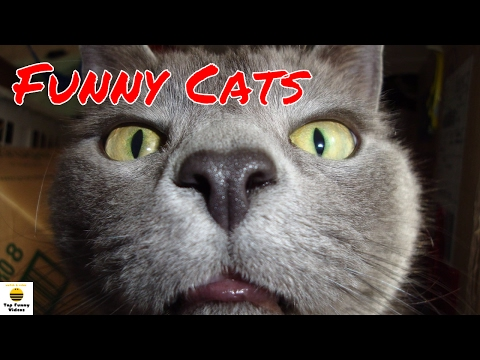 Funny Cats Compilation 2017 [P4]   🐱 Best Funny Cat Videos Ever - Funny Cats 2017 by TFVs 🐱