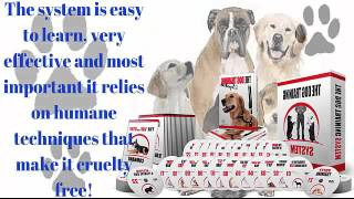 Best Dog Training Tips! Easy ways and humanitarian