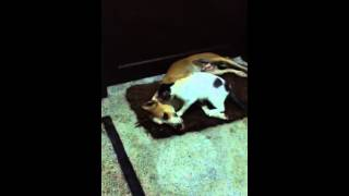 Intemecy of pet