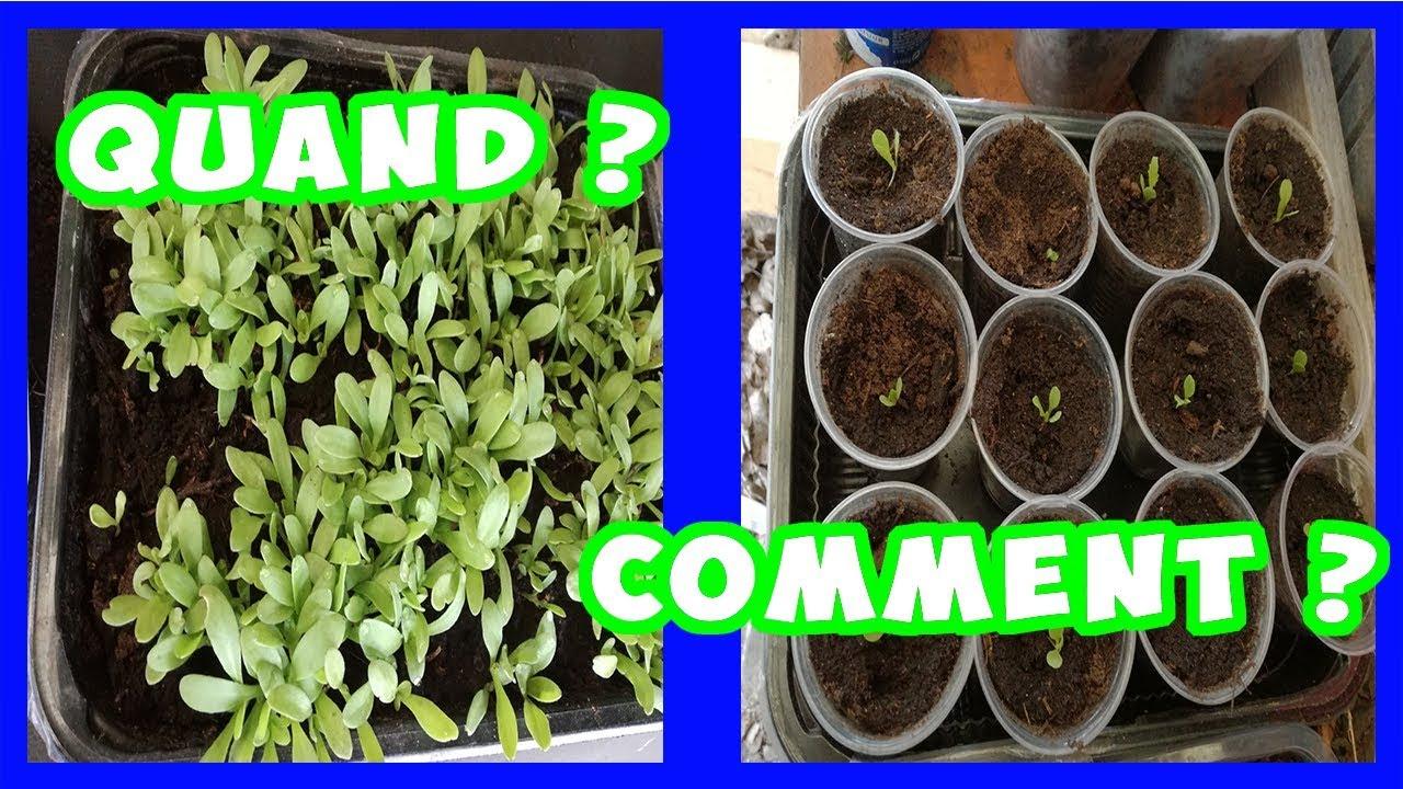 Quand et comment repiquer des salades et laitues r ponse un abonn youtube - Quand repiquer les salades ...