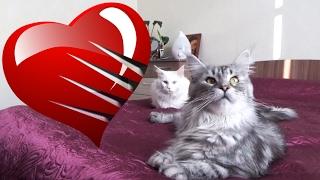 День Святого Валентина. История любви.