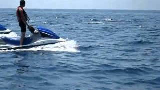 Porquerolles, rencontre avec des dauphins en jetski