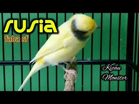 Download Lagu RUSIA Kenari FABA SF