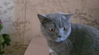 Володя говорящий робот пылесос и кот, не хочет ехать к Малахову на передачу.