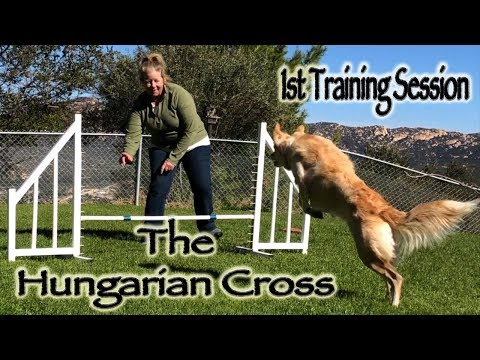 The Hungarian Cross - 1st Training Session