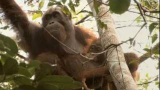 GREEN (Palm Oil Deforestation) - Documentary by Patrick Rouxel