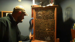 Observation Hive And Winter