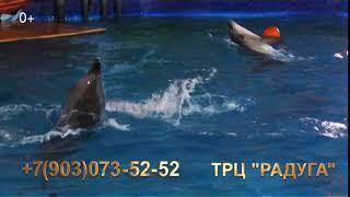 Уникальное театрализованное шоу дельфинов: