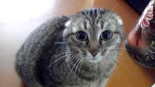 Адская кошка Дуся