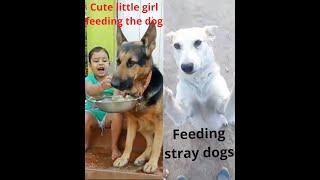 Adorable Babies Feeding Dog Compilation