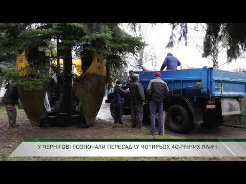 Телеканал Новий Чернігів: У Чернігові вперше пересадили 40-річні ялини