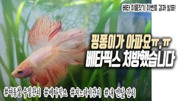 #18.(설참)핑퐁이가 아파요ㅠ.ㅠ 베타픽스 처방했습니다!! 베타 물고기 치료 열대어 치료 무환수 무여과기 수질관리 어렵네요ㅠㅠ | 물생활 vlog