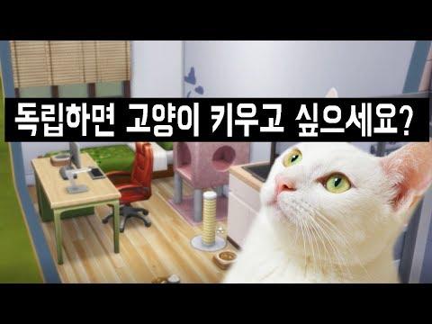 원룸에서 고양이를 잘 키울 수 있을까? (힘든