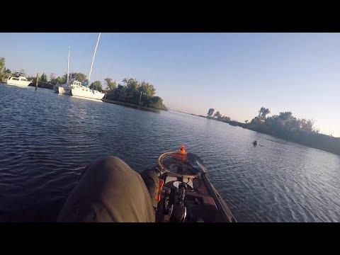 Sea Lion gets aggressive with Kayak Fisherman