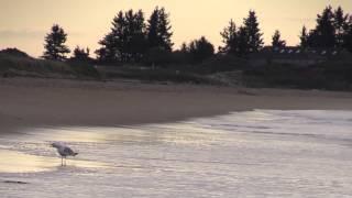 Seashore Digital Diaries: Coastal Reflection