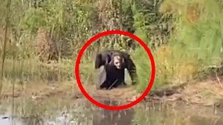 Una Extraña Criatura Fue Captada En Un Bosque Cercano A La Ciudad 😨