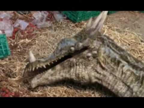 Dracorex Tribute