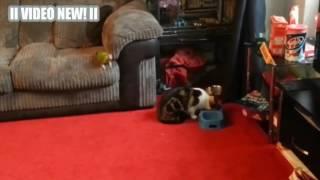 Приколы над кошками#26 |  Видео приколы про котов | Кошки и попугаи отжигают