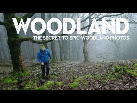 The SECRET to IMPROVE Landscape Photography in Woodland