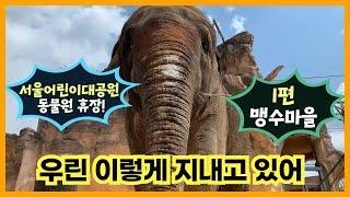 서울어린이대공원 동물원 휴장 이야기_1편 맹수마을썸네일