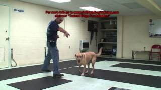 Yellow Lab For Adoption - Dog Training Support By K9-1.com