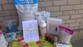 видео Защита винограда от болезней и вредителей