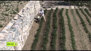 Sjemenski krumpir - kolektiva