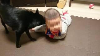 A太(5ヶ月)の初めての寝返りを一生懸命応援(サポート!?)するスキ...