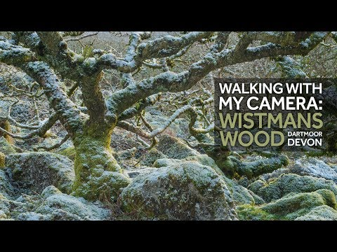 Walking & Landscape Photography: Dartmoor, Wistmans Wood