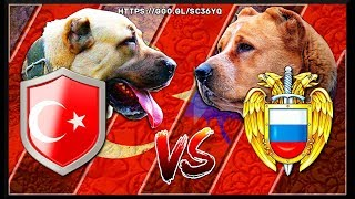KANGAL VS ALABAI | (Kangal Turco VS Pastor de asia central)