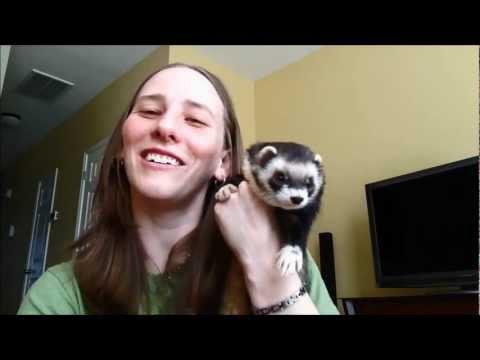 Ferret Training 103: Litter box training