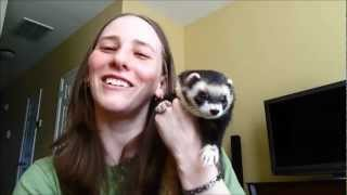 Ferret Training 103: Litter Box Training