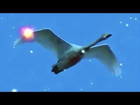 Music By CUSCO - Swan