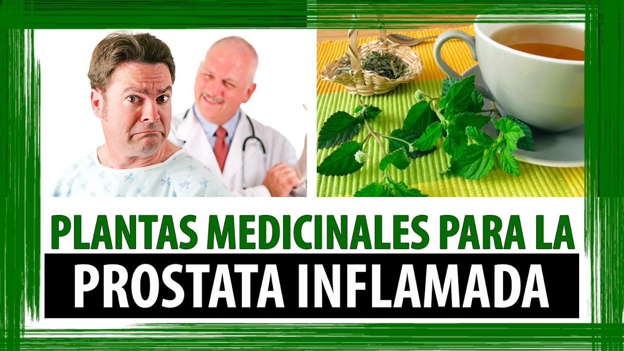 Plantas medicinales para la prostata inflamada hierbas for Planta decorativa con propiedades medicinales