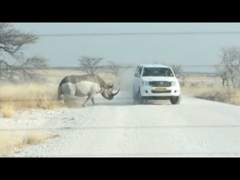 Animals attacking  while safari compilation,rhino,siberian tiger,cheetah,hippo,giraffe,african eleph