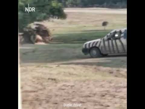 Ultimate Fails Rhino vs Car