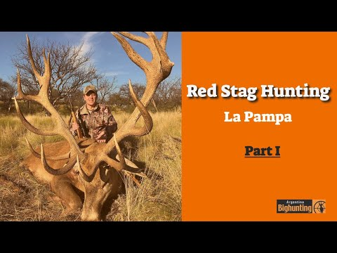 Red Stag Hunting In La Pampa With Argentina Big Hunting
