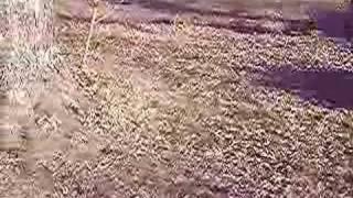 Baixar http://www.wheatenterrierrescue.org